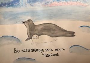 Внимание тюлени (2)