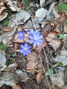Здравствуй, весенний лес (2)
