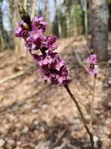 Здравствуй, весенний лес (3)