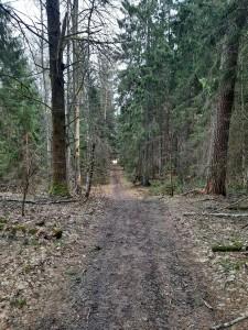 Здравствуй, весенний лес (5)